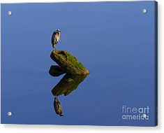 Sea Of Tranquility Acrylic Print by Mike  Dawson