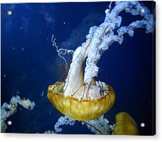 Acrylic Print featuring the photograph Sea Orchid by Kristen R Kennedy