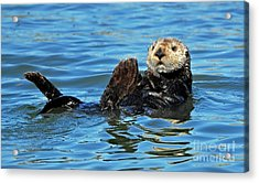 Acrylic Print featuring the photograph Sea Otter Primping by Susan Wiedmann