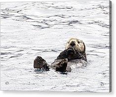 Sea Otter Acrylic Print by Saya Studios
