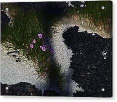 Sea Pink Acrylic Print by Steve Watson