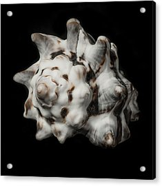 Sea Shell #2 Acrylic Print