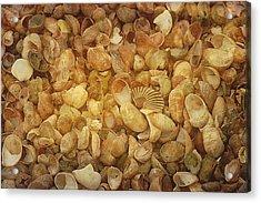 Seashells Red River Beach Harwich Cape Cod Ma Acrylic Print by Suzanne Powers