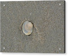 Sea Shell Sally Acrylic Print by JAMART Photography