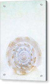 Sea Shell Acrylic Print by Stephanie Frey