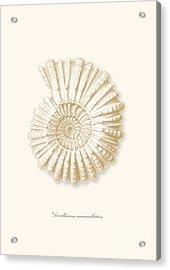 Sea Shell White French Vintage Acrylic Print by Patruschka Hetterschij