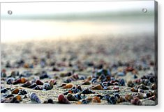 Sea Shells By The Sea Shore Acrylic Print by Kaleidoscopik Photography