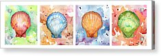 Sea Shells In Contrast Acrylic Print