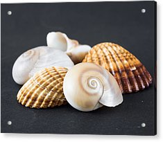 Sea Shells On A Black Background Acrylic Print