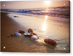 Sea Shells On Sand Acrylic Print by Michal Bednarek