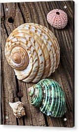 Sea Shells With Urchin  Acrylic Print by Garry Gay