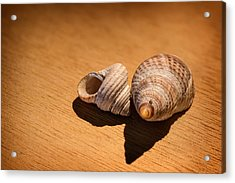 Sea Shells_3 Acrylic Print by Joe Hudspeth
