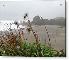 Sea Shore Acrylic Print by Ron Torborg