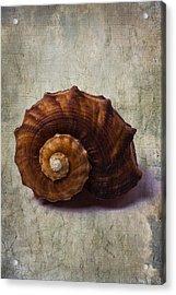 Sea Snail Acrylic Print