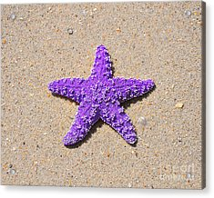 Sea Star - Purple Acrylic Print by Al Powell Photography USA