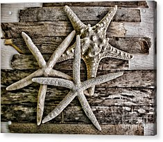 Sea Stars Acrylic Print by Colleen Kammerer