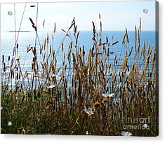 Acrylic Print featuring the photograph Sea Through Flora by Gayle Swigart