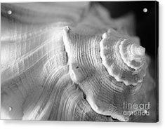 Sea Treasure Acrylic Print by Kelly Nowak