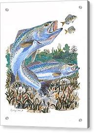 Sea Trout Acrylic Print by Carey Chen