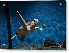 Sea Turtle 5d25085 Acrylic Print