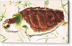 Sea Turtle Art By Sharon Cummings Acrylic Print by Sharon Cummings