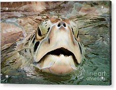 Sea Turtle Poking Head Out Of Water Acrylic Print by Dan Friend