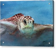 Sea Turtle  Acrylic Print by Stephanie Sodel