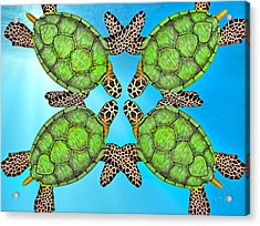 Sea Turtles Acrylic Print by Betsy Knapp