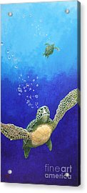 Sea Turtles Acrylic Print by Fred-Christian Freer