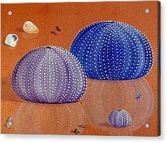 Sea Urchins On The Beach Acrylic Print by Karyn Robinson