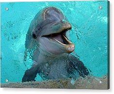Acrylic Print featuring the photograph Sea World Dolphin by David Nicholls