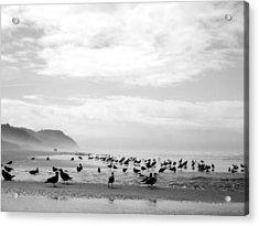 Seabird Horizon Acrylic Print