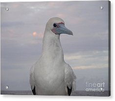 Acrylic Print featuring the photograph Seabird by Laura  Wong-Rose