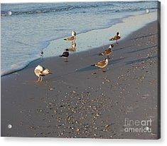 Seabirds Acrylic Print