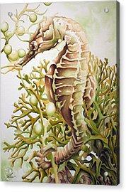 Seabiscuit Acrylic Print