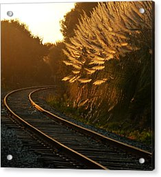Seacliff Tracks At Sunset Acrylic Print