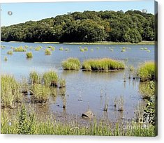Acrylic Print featuring the photograph Seagrass by Ed Weidman