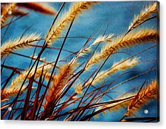 Acrylic Print featuring the photograph Seagrass In The Breeze by Pamela Blizzard