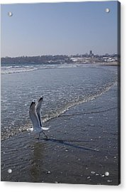 Acrylic Print featuring the photograph Seagull 1 by Robert Nickologianis