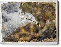 Seagull 3 Acrylic Print