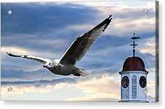 Seagull And Clock Tower Acrylic Print by Bob Orsillo