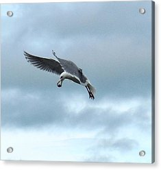 Seagull And His Breakfast Acrylic Print by Karen Molenaar Terrell