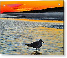 Seagull At Sunset Acrylic Print by Cindy Croal