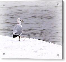 Seagull At The Lake In Winter Acrylic Print by Elizabeth Budd