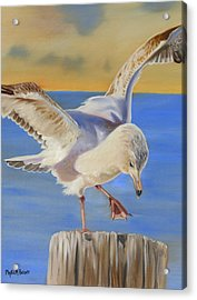 Seagull Ballet Acrylic Print by Phyllis Beiser