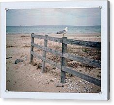 Seagull Acrylic Print by Brady D Hebert