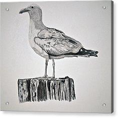 Seagull Acrylic Print by Chamar Radloff