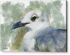 Acrylic Print featuring the painting Seagull Closeup by Greg Collins