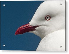 Acrylic Print featuring the photograph Seagull by Dennis Cox WorldViews