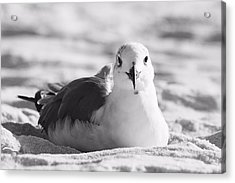 Acrylic Print featuring the photograph Seagull by Elizabeth Budd